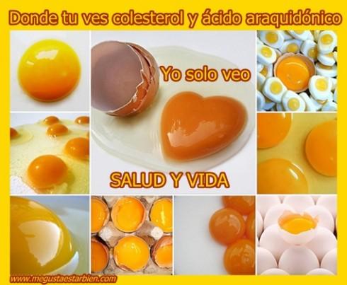 huevos colesterol araquidonico