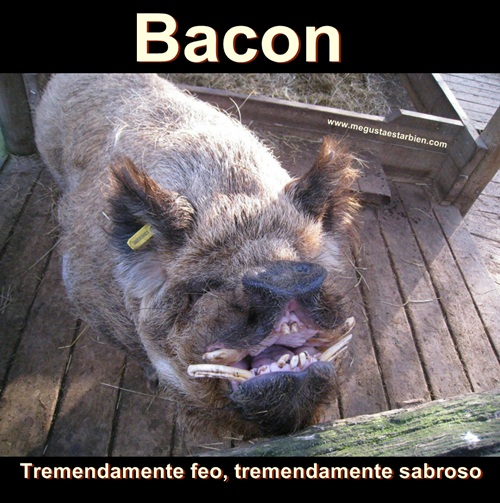 bacon feo
