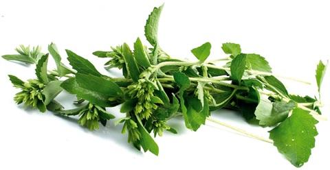 Stevia-hojas