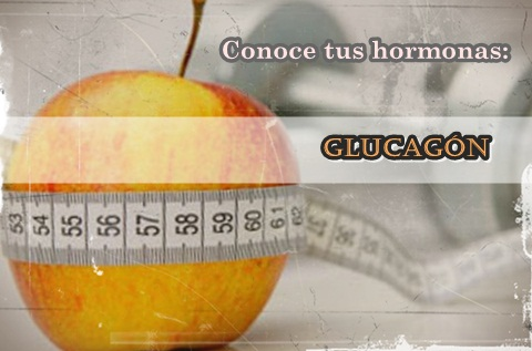 glucagon y dieta