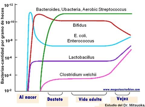 desarrollo de microbiota