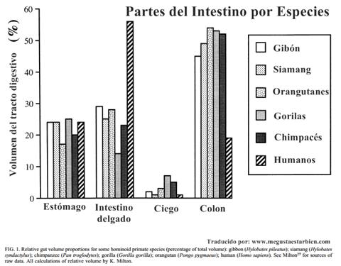 partes de intestino en primates y humanos