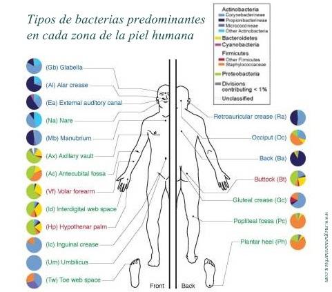 microbiota de la piel