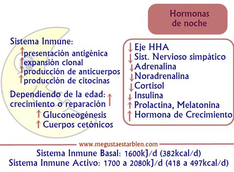 hormonas de noche