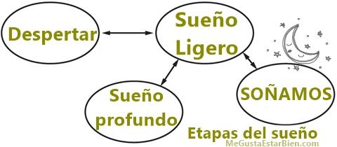 esquema etapas del sueño