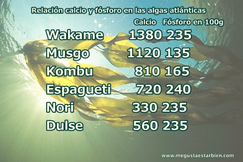 calcio y fosforo en algas atlanticas