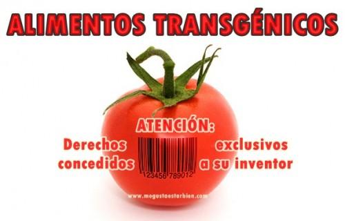 Alimentos transgenicos tomate