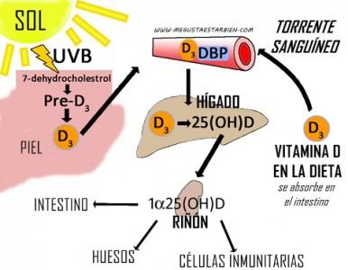 como funciona la vitamina d