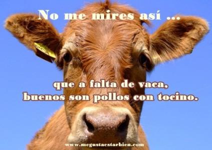 vaca grano pasto