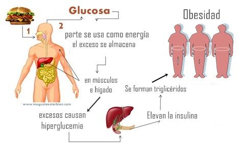 metabolismo de carbo hidratos