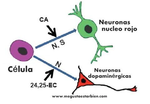 neuronas dopamina