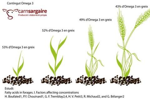 omega 3 plantas