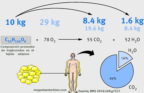 donde van los kilos de grasa