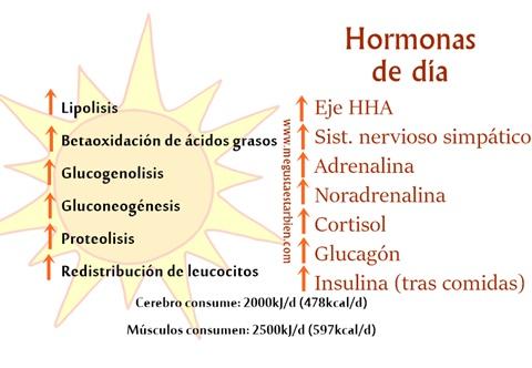 dia hormonas