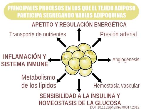 procesos en los qu interviene el tejido adiposo